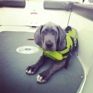 10 weeks old in his life jacket.